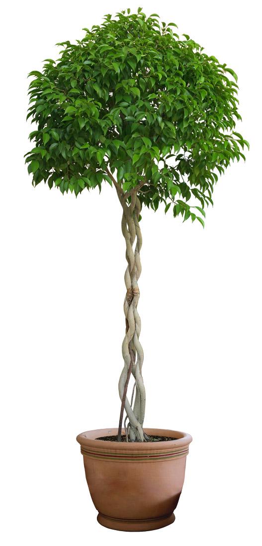 ПЕРЕСАДКА комнатных растений и цветов как и когда ЛУЧШЕ